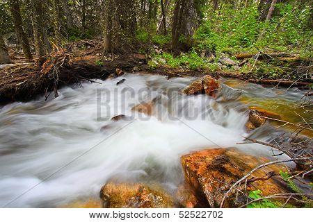 Bucking Mule Creek In Wyoming