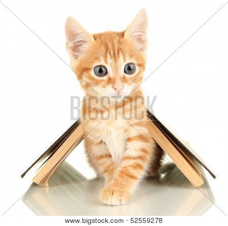 Cute little red kitten and book isolated on white