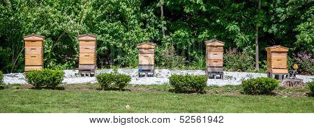 Row Of Beehives