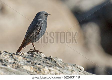 Close-up Of A Bird, Sikkim