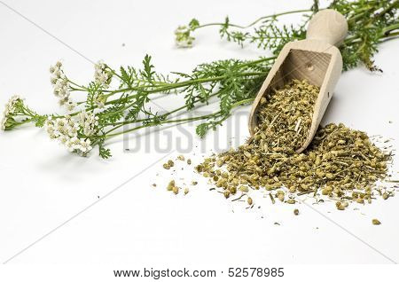 Wooden shovel with dried yarrow