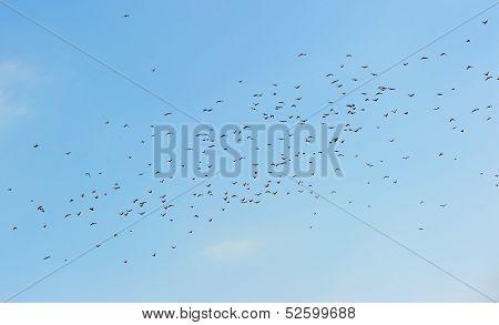 Many birds in the sky