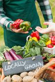 stock photo of farmers  - Farmer selling organic peppers at a farmers market - JPG