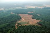 Northwest Clearcut