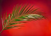 Palm branches on the red color background