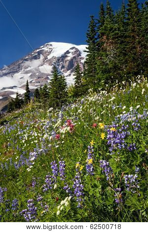 Mount Rainier And Wildflowers