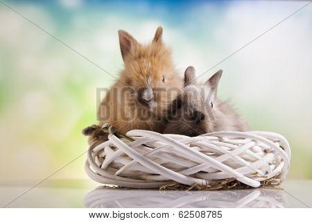 Rabbit on Bunny, Happy easter