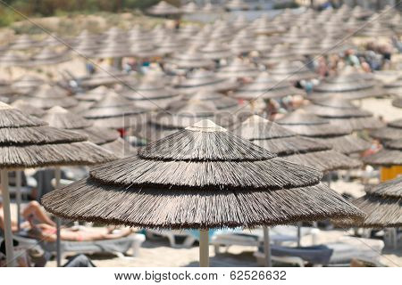 Large Group Of Parasols