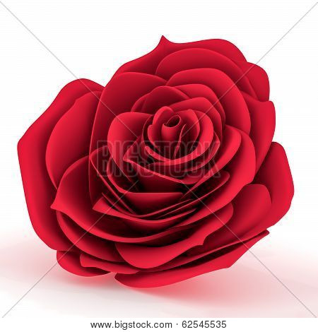 Front View Of A Red Rose
