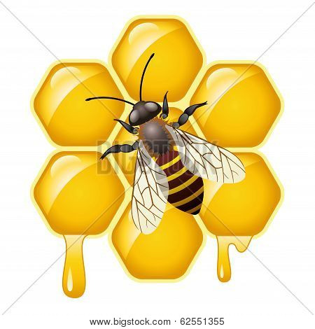 Vector Working Bee On Honeycells
