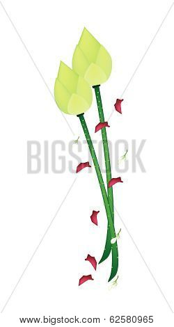 Fresh Lotus Flower On A White Background