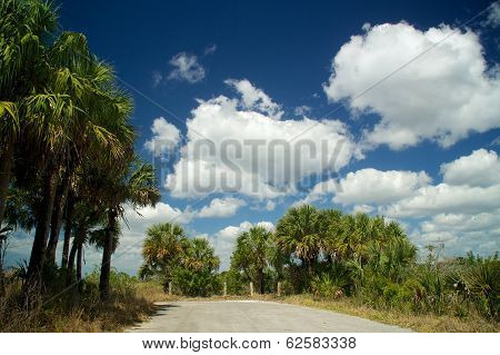 Dead End Road In Everglades Florida