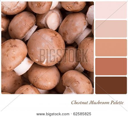 A background of fresh chestnut mushrooms in a colour palette with complimentary colour swatches