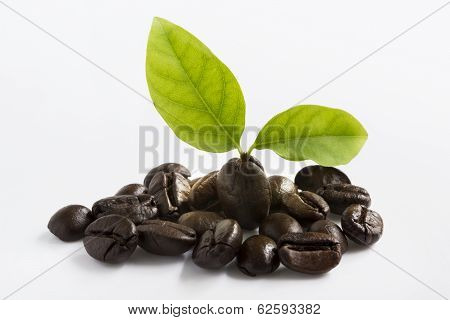 Closeup of two coffee beans at roasted coffee heap