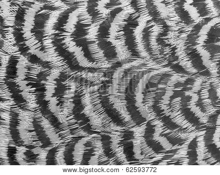 Spruce Grouse Feathers Nature Pattern Background