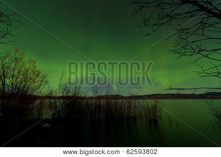 Northern Lights Display Lake Laberge Shore Willows