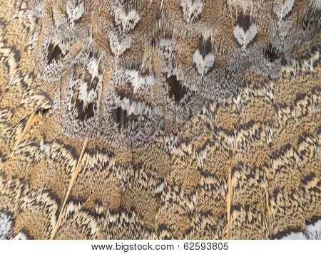 Ruffed Grouse Feathers Nature Pattern Background