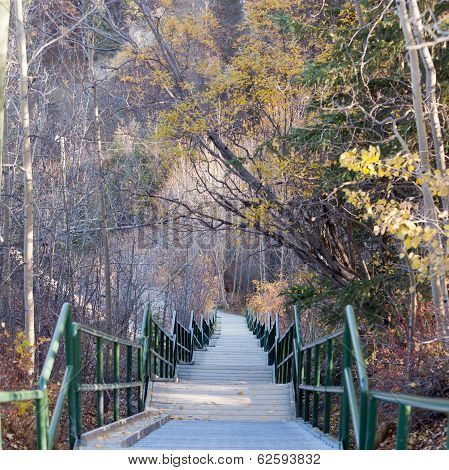 Endless Stairs Leading Down Late Fall Forest