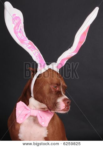 Sporting the bunny ears