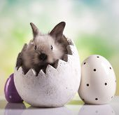 foto of bunny ears  - Easter Bunny with egg - JPG