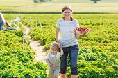stock photo of strawberry blonde  - Mother and little boy of 2 years on organic strawberry farm in summer picking berries - JPG