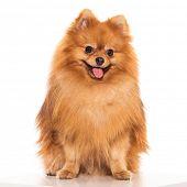 pic of furry animal  - Adorable - JPG