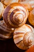 foto of mollusca  - Group of snail shells escargots de Bourgogne under the sunlight - JPG