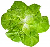 image of iceberg lettuce  - Lettuce Salad Leaves Top View Surface Isolated On White Background - JPG
