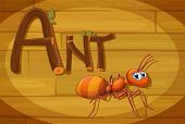 Illustration of a wooden frame with an ant