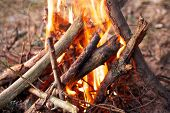 picture of bonfire  - Closed up bonfire in forest camp - JPG