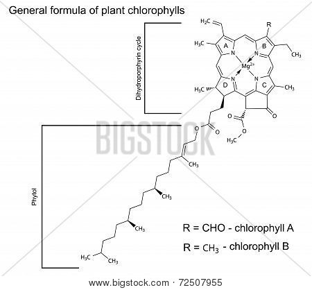 General Structural Chemical Formula Of Plant Chlorophyll Molecules
