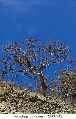 Tree Overgrown with Beard Lichen
