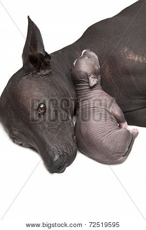 Newborn Puppy With Mother