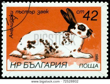 Vintage  Postage Stamp. English Motley Rabbit.
