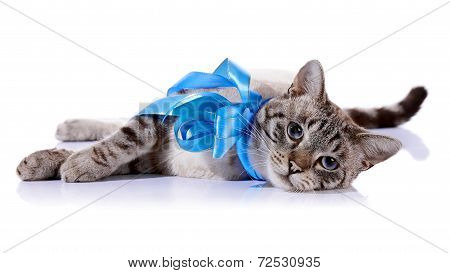 The Striped Cat With Bow Lies