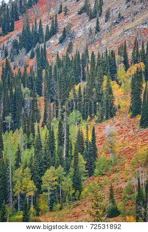 Mountainside Fall