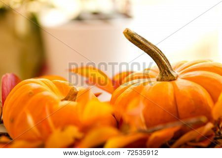 Baby Pumpkins On A Bed Of Fall Leaves