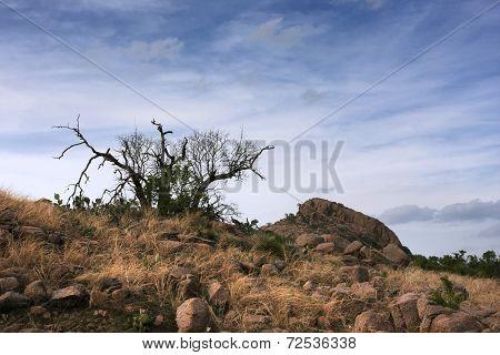A Rocky Land