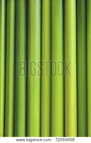 Green Sedge similar bamboo