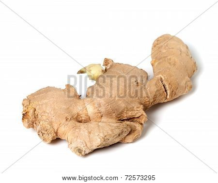 Fresh Ginger Rhizome