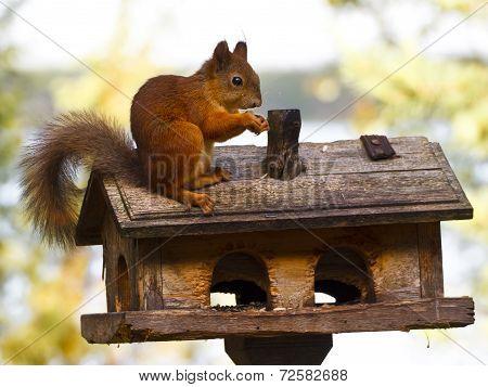 Squirrel sitting on a bird feeder