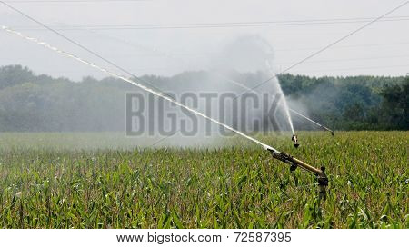 Agricultural Sprinkler Watering Cornfield