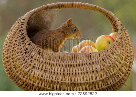 Apple Joy