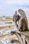 picture of gargoyles  - A gargoyle observes the city of Paris from its privileged position - JPG