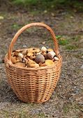stock photo of baste  - the bast basket  full of edible mushrooms - JPG