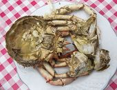 pic of cooked crab  - Dish cooked crab - JPG