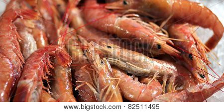 Crustaceans For Sale In The Market
