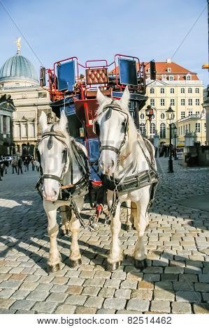 Two Horses Harnessed To The Carriage