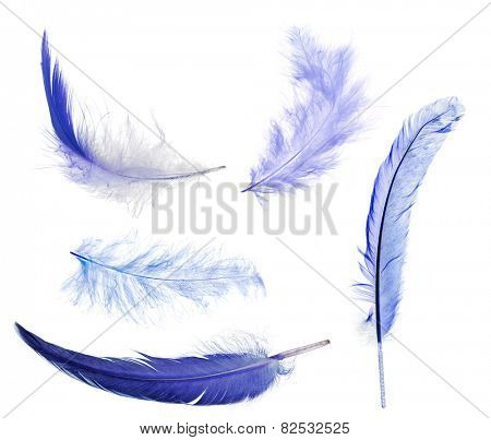 five blue feathers isolated on white background
