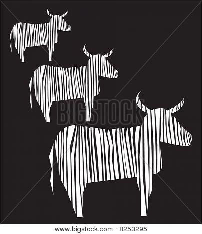 3 beefs standing